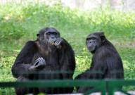 No kids below 10 years allowed as Lucknow zoo set to reopen