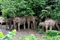 Elephant Whisperer: UP forest officials have never heard of it