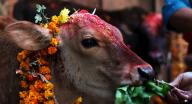 30,000 animals to be sacrificed at Nepal temple festival