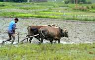 Farmers paid within 3 days of procurement: NAFED chief (IANS Interview)