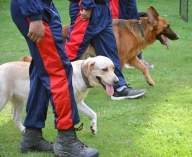 New tech allows dog squad to live stream from risky areas
