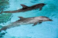 Starting 2022, India to undertake river dolphins census every three years (Lead)