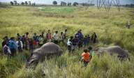 246 elephants died in Odisha in 3 years: Minister