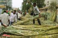 Cane farming in 'no man's land' on UP-Nepal border