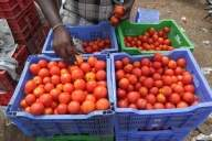 Govt asks Mother Dairy to sell tomatoes at Rs 40 per kg