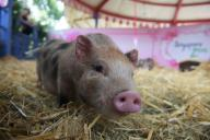Pig brains partially revived hours after death