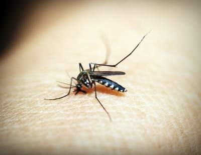 Bangladesh reports highest single-day dengue cases so far this year