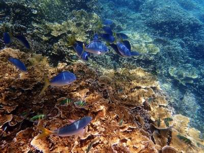 Australia and China spar over the Great Barrier Reef