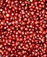 Boosting horticulture: Kashmir's 'Mishri' variety of cherries exported to Dubai