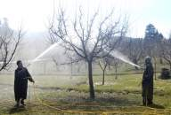 Will Centre's scheme for apple farmers in Kashmir work? (Special Report)