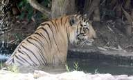 CZA asks zoos to remain on high alert
