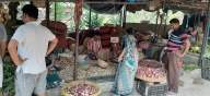 Supply shortage sends onion prices soaring to 4-yr high