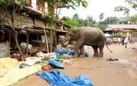Tuskers continue to roam in UP, kill another person
