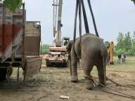 Tusker 'brothers' released in Pilibhit Tiger Reserve