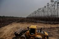 Brazil launches forest concessions studies in Amazon area