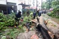 HC stays axing of 700 trees in Chandigarh for flyover