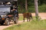 Do's and don'ts while planning a wildlife safari