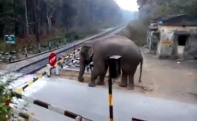 Clipping of elephant crossing track goes viral on Twitter
