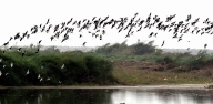 Mysterious suicide of birds in Assam village portrayed in poems (Review)