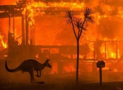 Study finds massive doubts over Aus forests' ability to recover from bushfires
