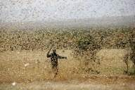 Threat of locust swarms looms over Delhi (Ld)
