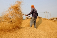 MSP value of Rs 11,099.25 crore paid for paddy: Govt