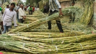 'Addressing sugarcane farmers' concern to help party'