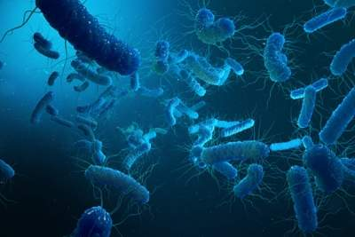 Are good bacteria getting viral infections?