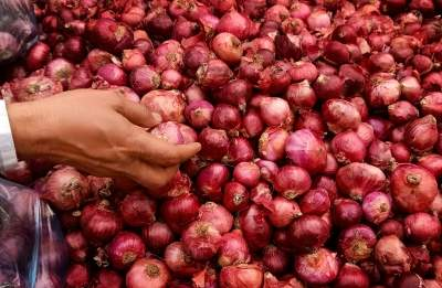 Rain effect on relatively less area on tomato, onion crops: Govt data