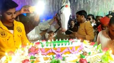 Owner throws lavish party on horse's birthday, cuts 50-pound cake