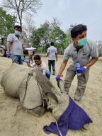 Rhino calves rescued during floods in Kaziranga to move to Manas Tiger Reserve