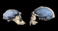 Modern human brain originated 1.7 mn years ago in Africa