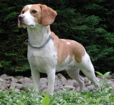The story of how a Beagle inspired NanoSniffer -- an explosives detector with a difference