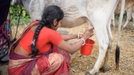 These UP women are milking their way to success