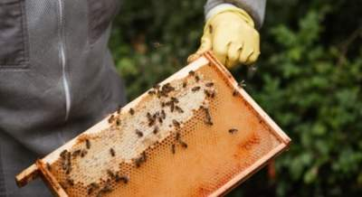 Are you consuming 'healthy honey'?