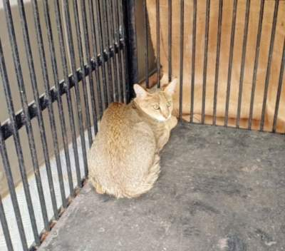 Wild cats rescued from Telangana poultry farm