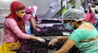 Widening the market for Nashik-based jamun agroforestry