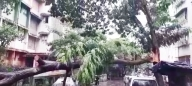 Cyclone Tauktae storms over Mumbai, razes trees, damages homes