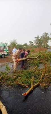 Cyclone Tauktae: 4 killed while collecting mangoes in Raj