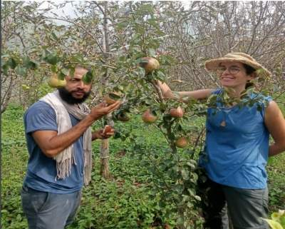 Himachal's climate-resilient agriculture attracts foreigners