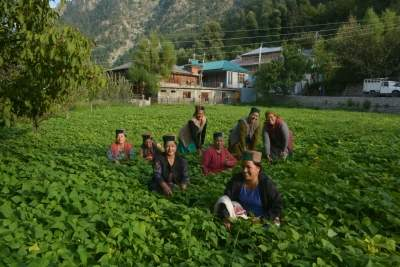 Himachal women become agents for climate resilient farming